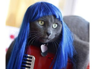 Kitty Perry, anyone?