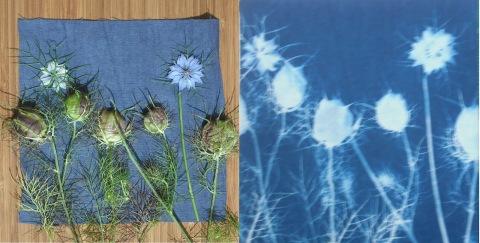 Sunography Fabric