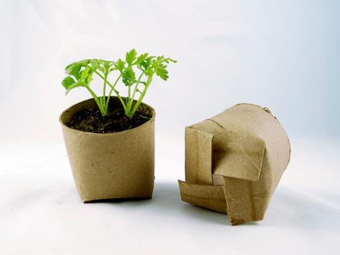 TP Seedlings