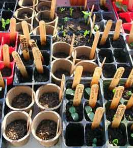 seedlings-0177