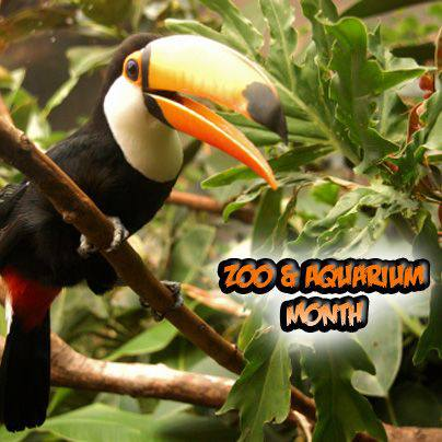 National Zoo and Aquarium Month