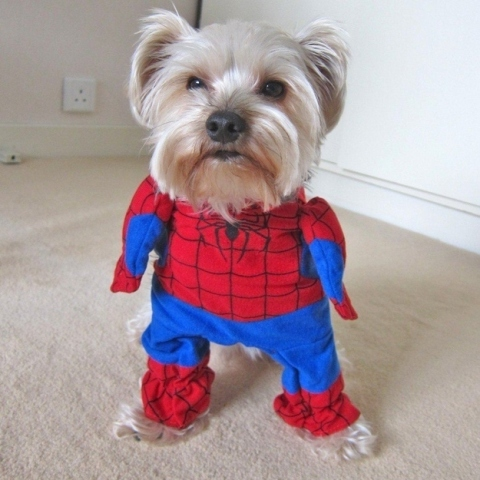 spiderman-puppy