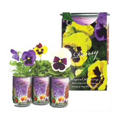 Magic Flowers: Pansy