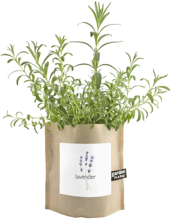 Lavender in a bag