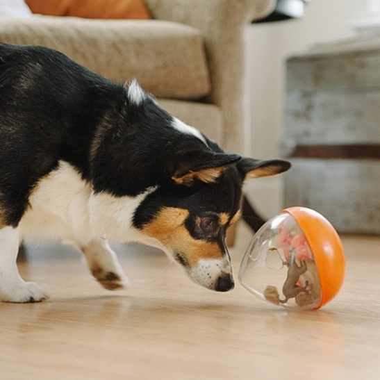Pet Play Wobble Balls