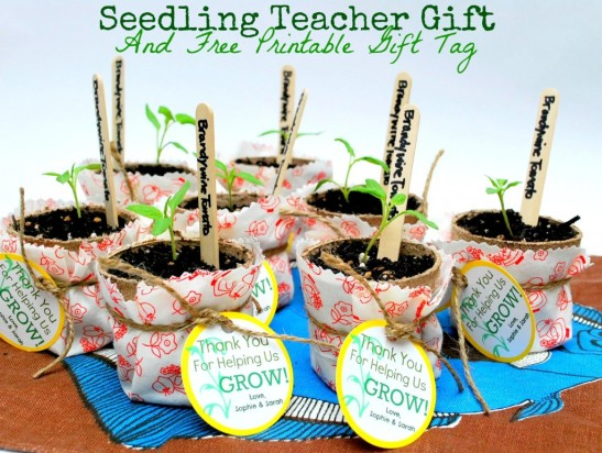 seedling-teacher-gift-and-free-printable-gift-tag-by-the-silly-pearl-1024x773