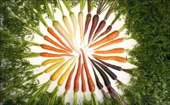 carrot20varieties