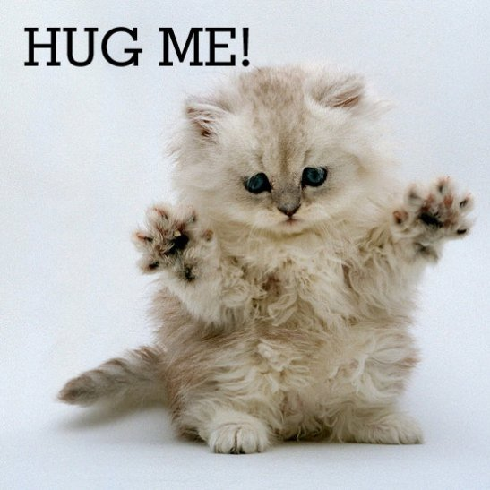 hug_your_cat_day